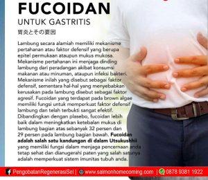 Obat Gastritis Kronis Alami